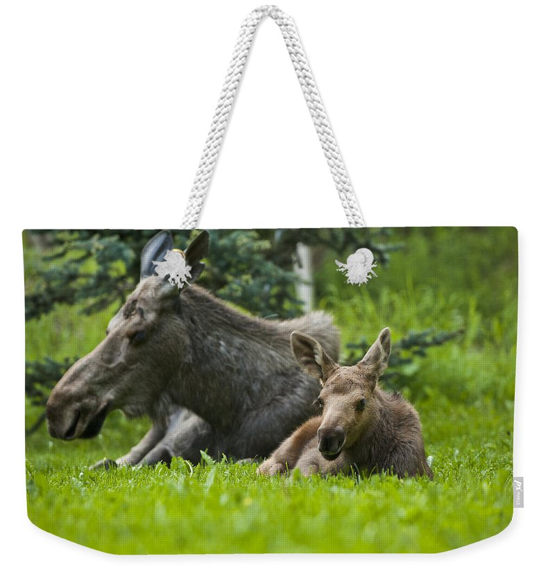 Moose Weekender Tote Bag featuring the photograph Protector by Ted Raynor