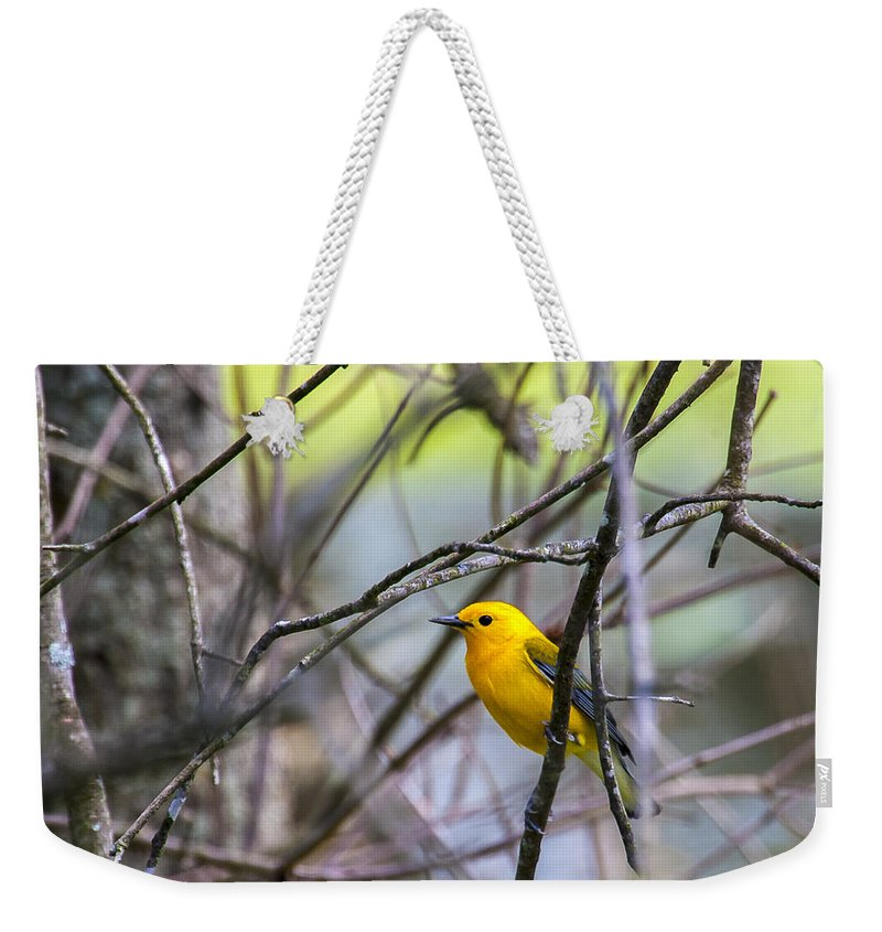 Animal Weekender Tote Bag featuring the photograph Prothonotary Warbler by Jack R Perry