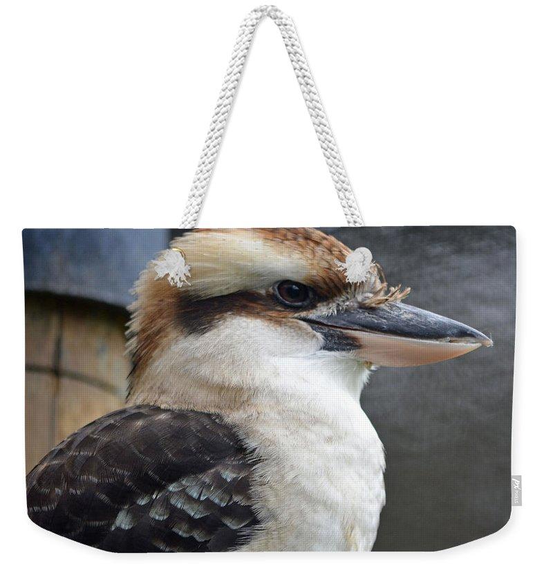 Kookaburra Weekender Tote Bag featuring the photograph Proud Kookaburra by Richard Bryce and Family