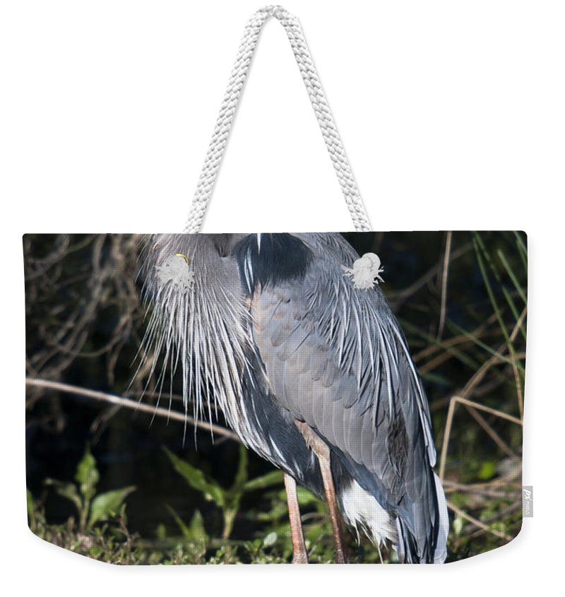Blue Heron Weekender Tote Bag featuring the photograph Pround Blue Heron by Dale Powell