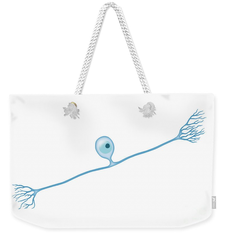 Neuron Weekender Tote Bag featuring the photograph Pseudounipolar Neuron by Monica Schroeder / Science Source