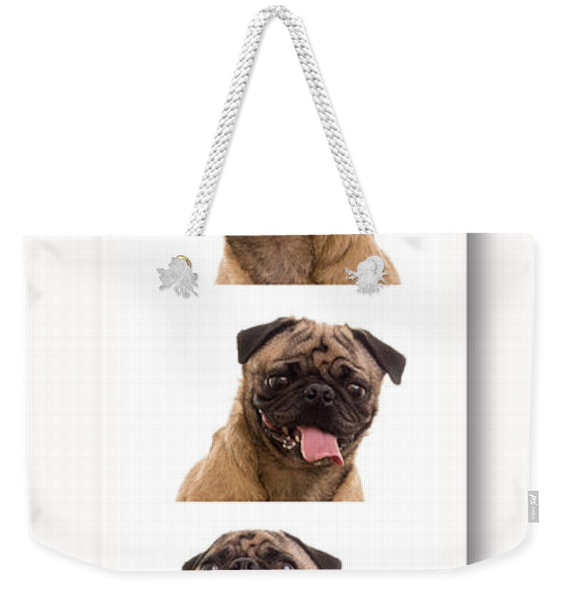 Pug Weekender Tote Bag featuring the photograph Pug Photo Booth by Edward Fielding