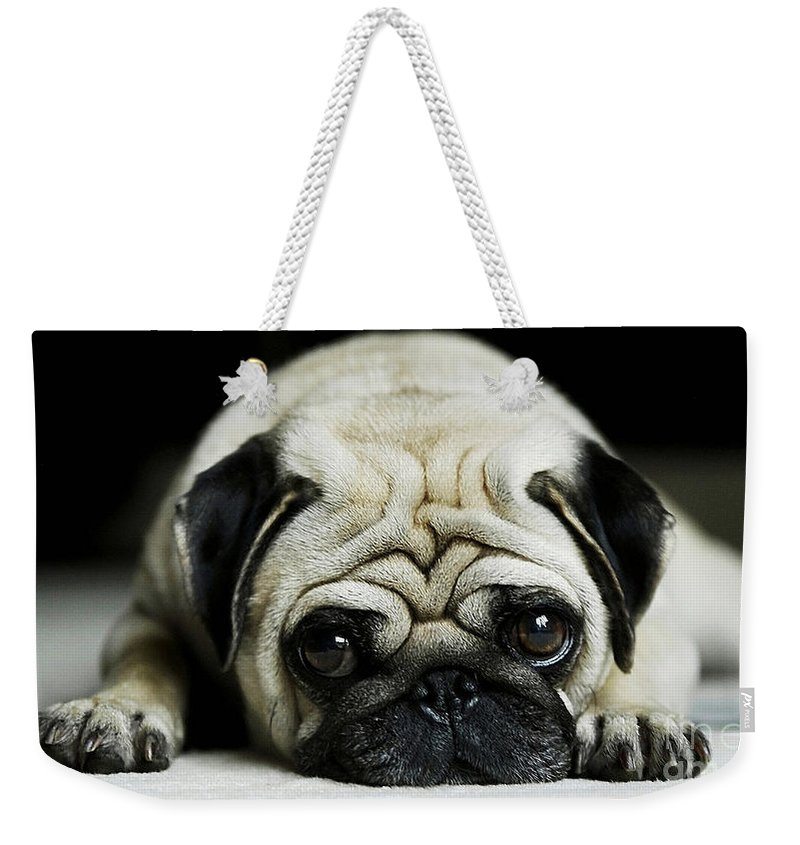 Pug Photographs Weekender Tote Bag featuring the mixed media Pug Puppy by Marvin Blaine