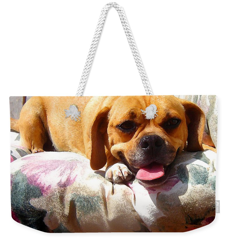Animal Weekender Tote Bag featuring the painting Puggle Lounging by Amy Vangsgard