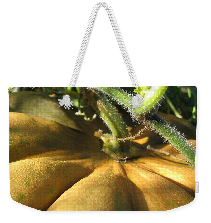 Close Up Weekender Tote Bag featuring the photograph Pumpkin Ripe by Noa Mohlabane