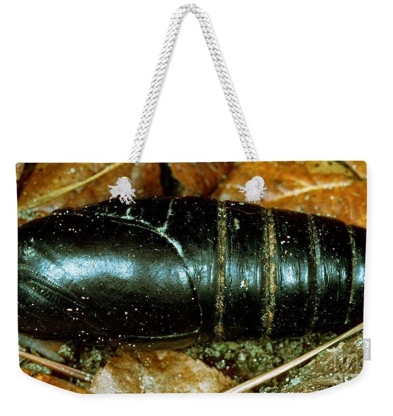 Animal Weekender Tote Bag featuring the photograph Pupa Of A Regal Moth Citheronia Regalis by Millard H. Sharp