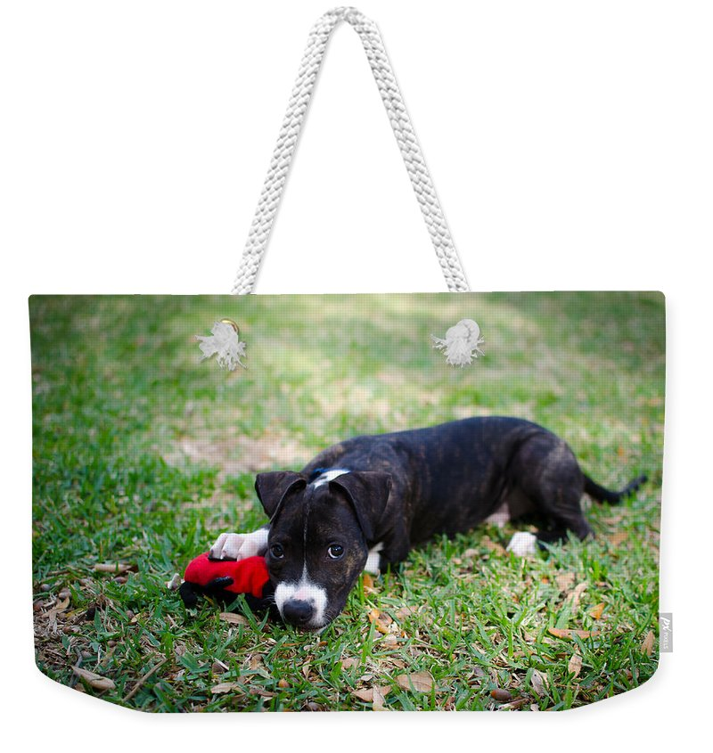 Puppy Weekender Tote Bag featuring the photograph Puppy Eyes by David Morefield