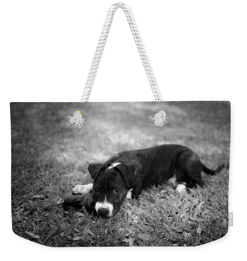 Black And White Weekender Tote Bag featuring the photograph Puppy Eyes In Black And White by David Morefield