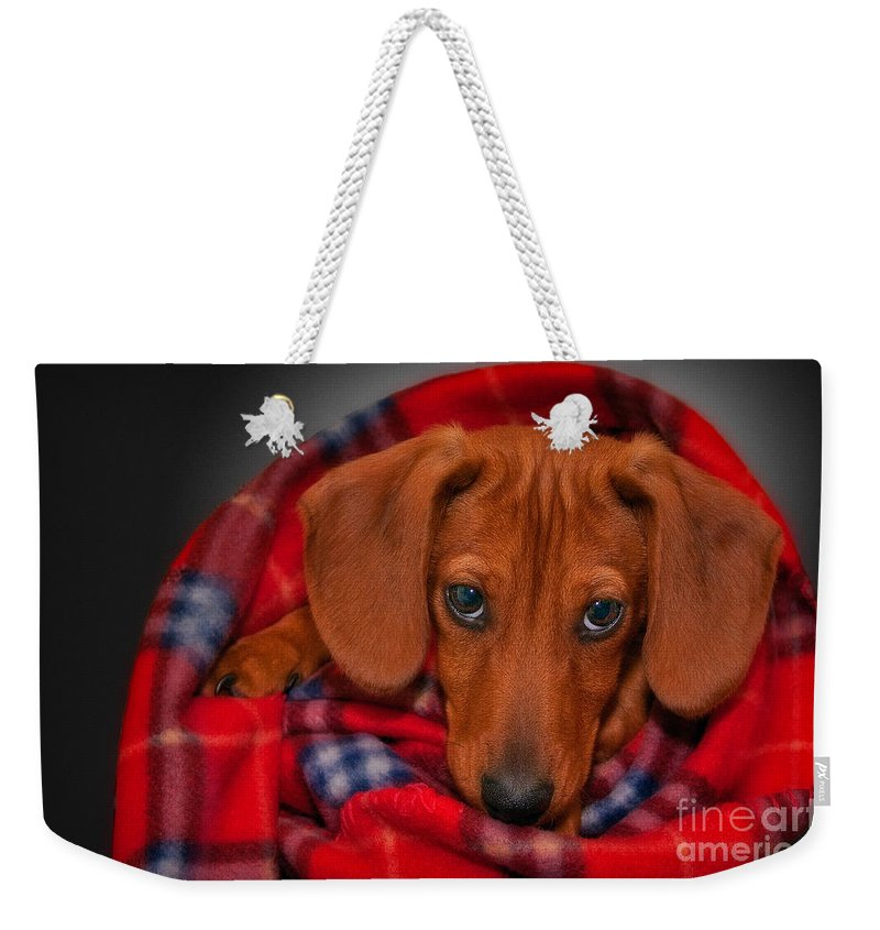 Puppy Weekender Tote Bag featuring the photograph Puppy Love by Susan Candelario
