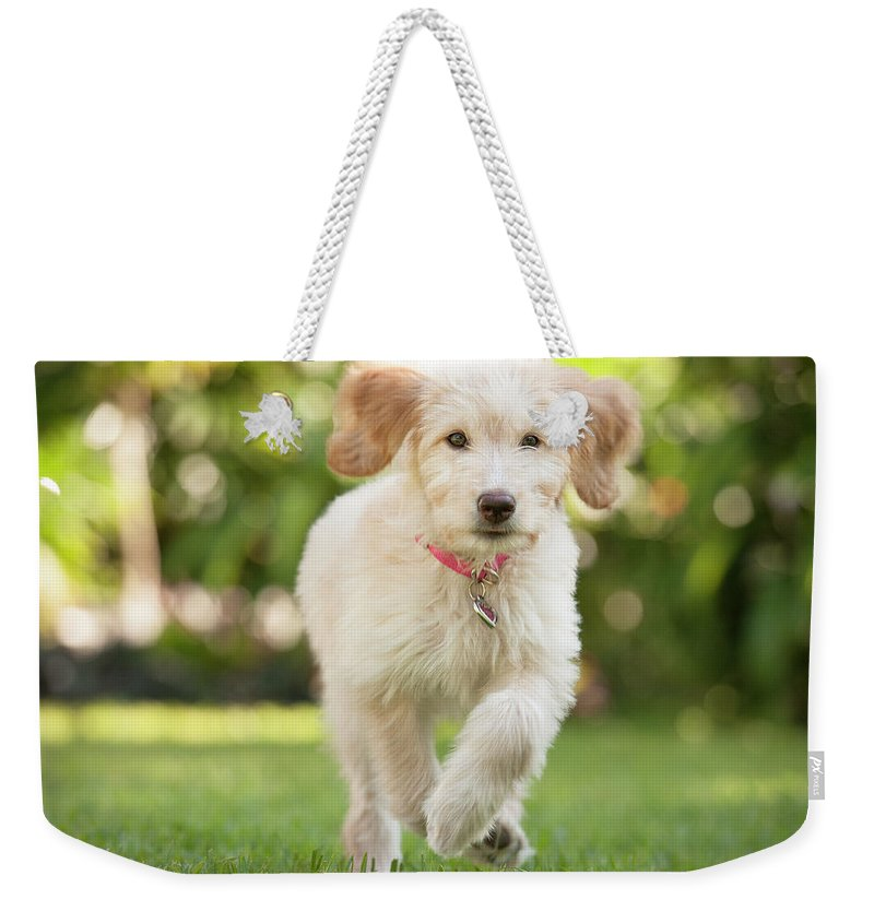 Pets Weekender Tote Bag featuring the photograph Puppy Running Through The Grass by Chris Stein