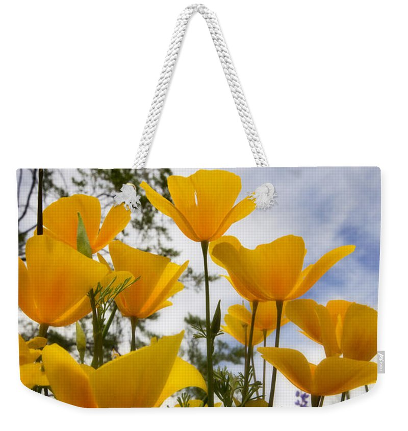 Poppies Weekender Tote Bag featuring the photograph Purely Poppies by Saija Lehtonen