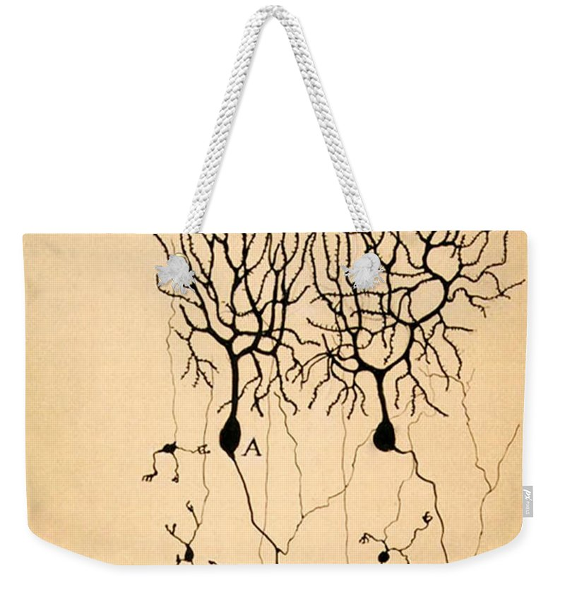 Purkinje Cells Weekender Tote Bag featuring the photograph Purkinje Cells by Cajal 1899 by Science Source