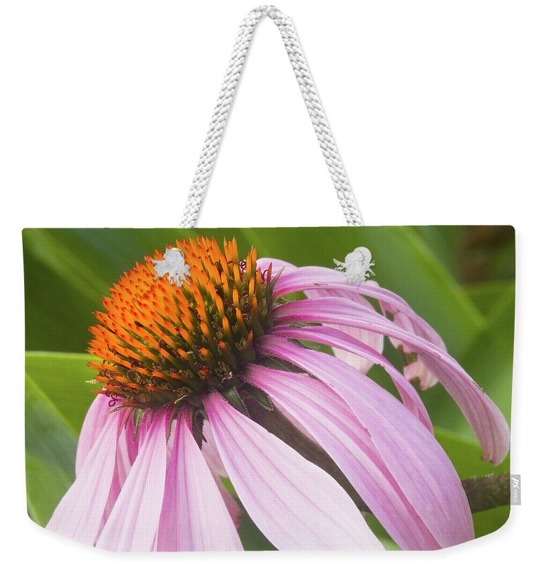 Purple Cone Flower Weekender Tote Bag featuring the photograph Purple Cone Flower Echinacea by Keith Webber Jr