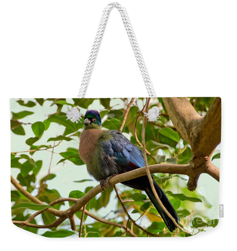 Purple-crested Lourie Weekender Tote Bag featuring the photograph Purple-crested Touraco by Anthony Mercieca