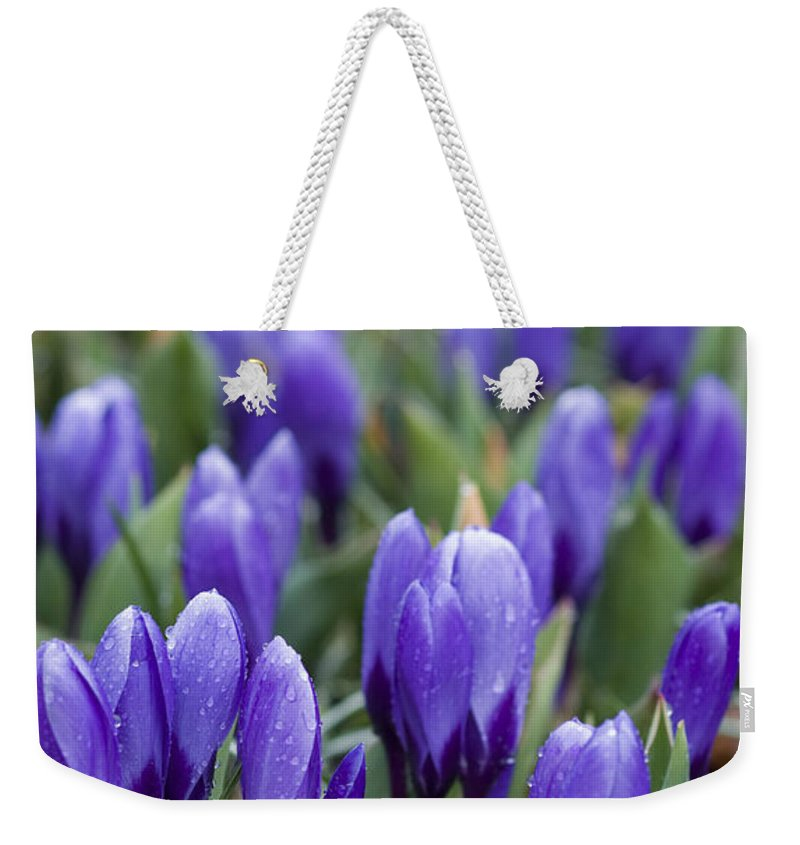 Botany Weekender Tote Bag featuring the photograph Purple Crocuses by Juli Scalzi