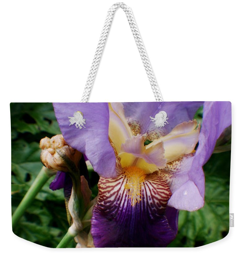 Fleur Weekender Tote Bag featuring the photograph Purple Flower After Rainfall by Doc Braham