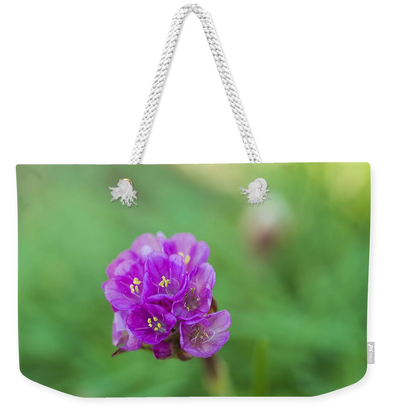 Nature Weekender Tote Bag featuring the photograph Purple Flower by Paulo Goncalves