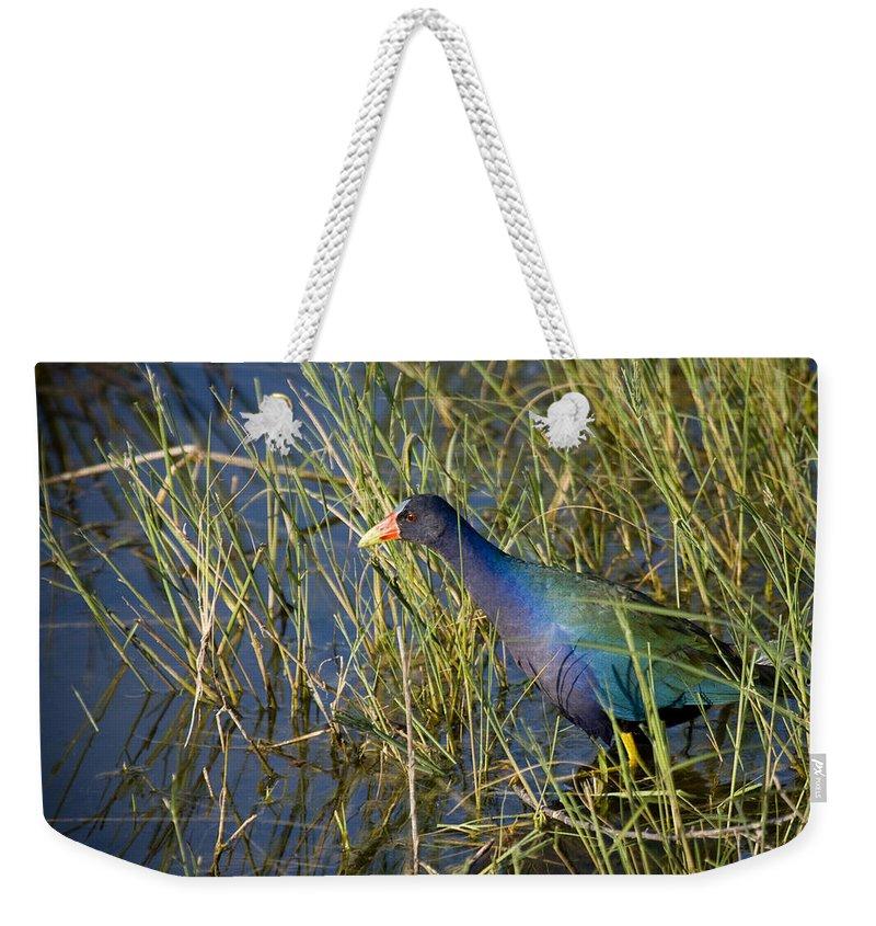 Purple Weekender Tote Bag featuring the photograph Purple Gallinule 2 by Sandy Swanson