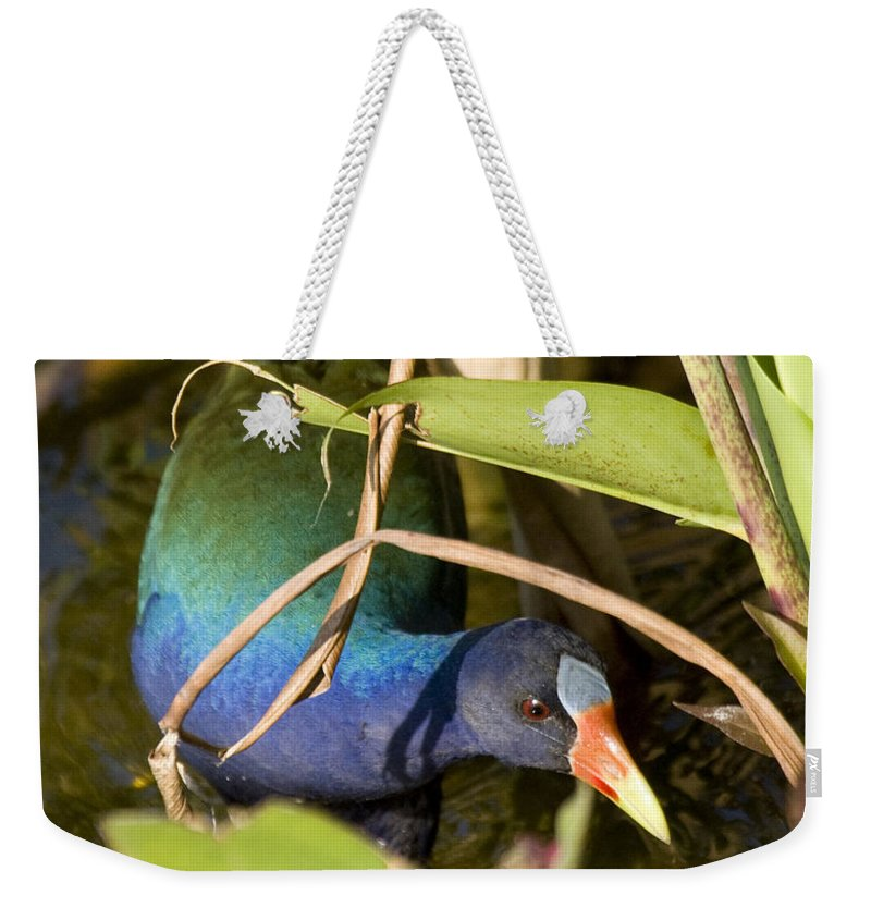 Purple Weekender Tote Bag featuring the photograph Purple Gallinule by Sandy Swanson