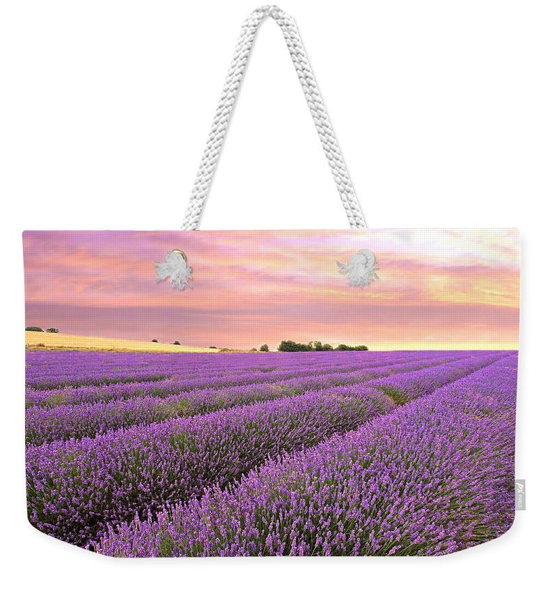 Purple Flowers Weekender Tote Bag featuring the photograph Purple Haze - Lavender Field At Sunrise by Gill Billington