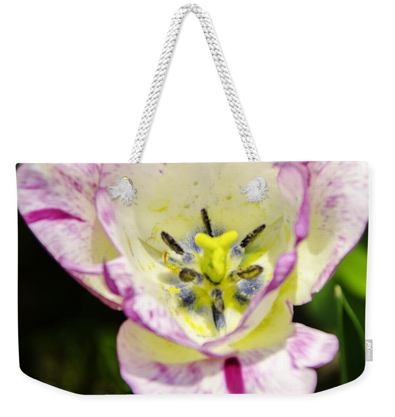 Usa Weekender Tote Bag featuring the photograph Purple Lace Tulip Time by LeeAnn McLaneGoetz McLaneGoetzStudioLLCcom