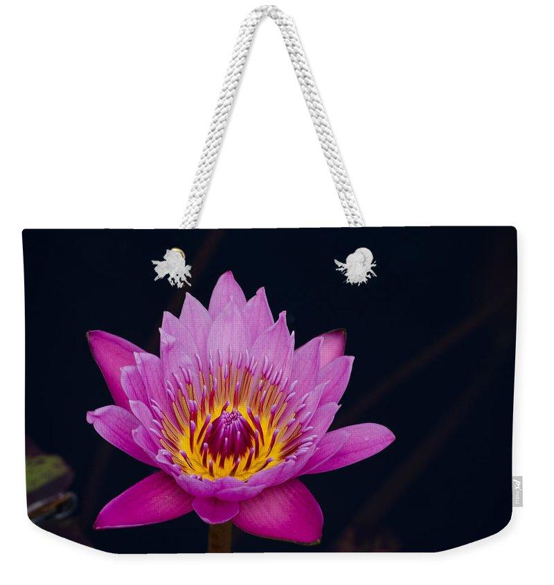 Flower Weekender Tote Bag featuring the photograph Purple Lotus Flower by Jim Shackett