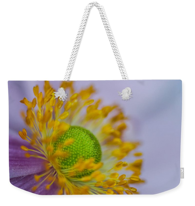 Flora Weekender Tote Bag featuring the photograph Purple Pastel Daisy by Gareth Burge Photography