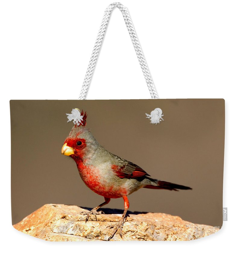 Fauna Weekender Tote Bag featuring the photograph Pyrrhuloxia Cardinalis Sinuatus Male by Anthony Mercieca