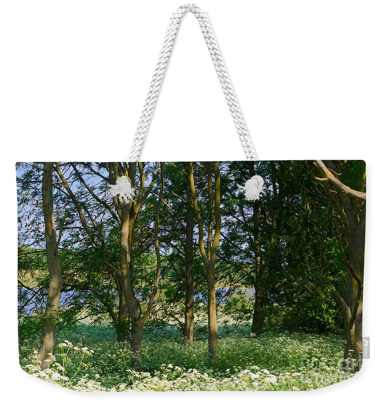 Queen Anne's Lace Weekender Tote Bag featuring the photograph Queen Anne's Lace Makes A White Carpet In The Woods Near Rutland by Louise Heusinkveld