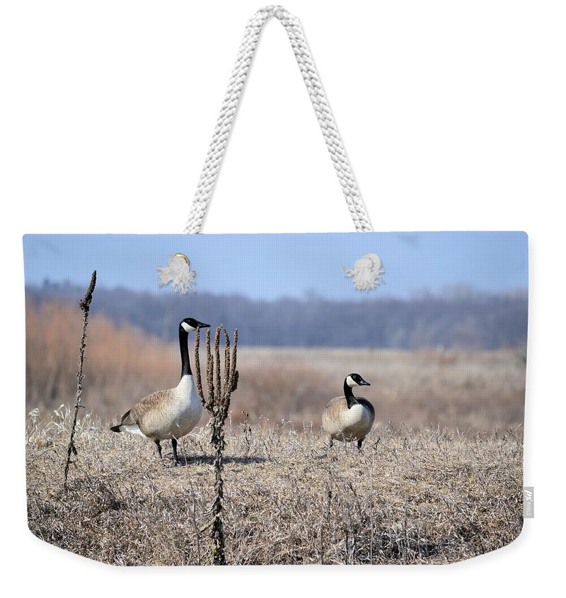 Canadian Goose Weekender Tote Bag featuring the photograph Quick Put Your Head Down by Bonfire Photography