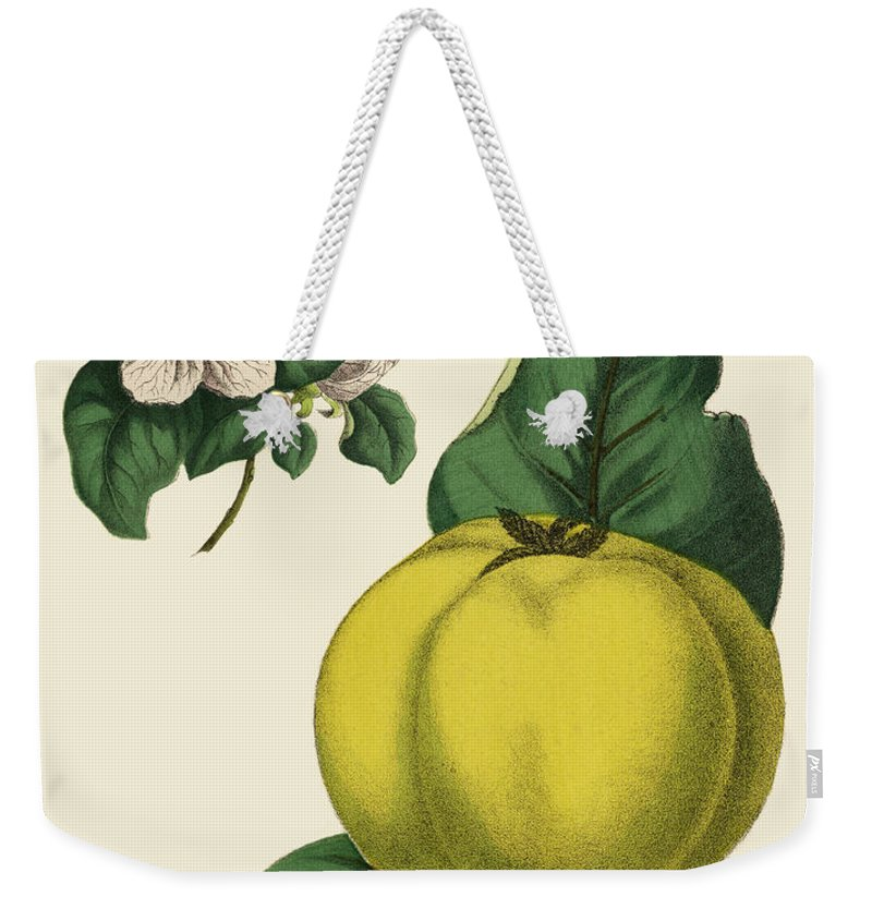 1880-1889 Weekender Tote Bag featuring the digital art Quince Fruit Tree, Victorian Botanical by Bauhaus1000