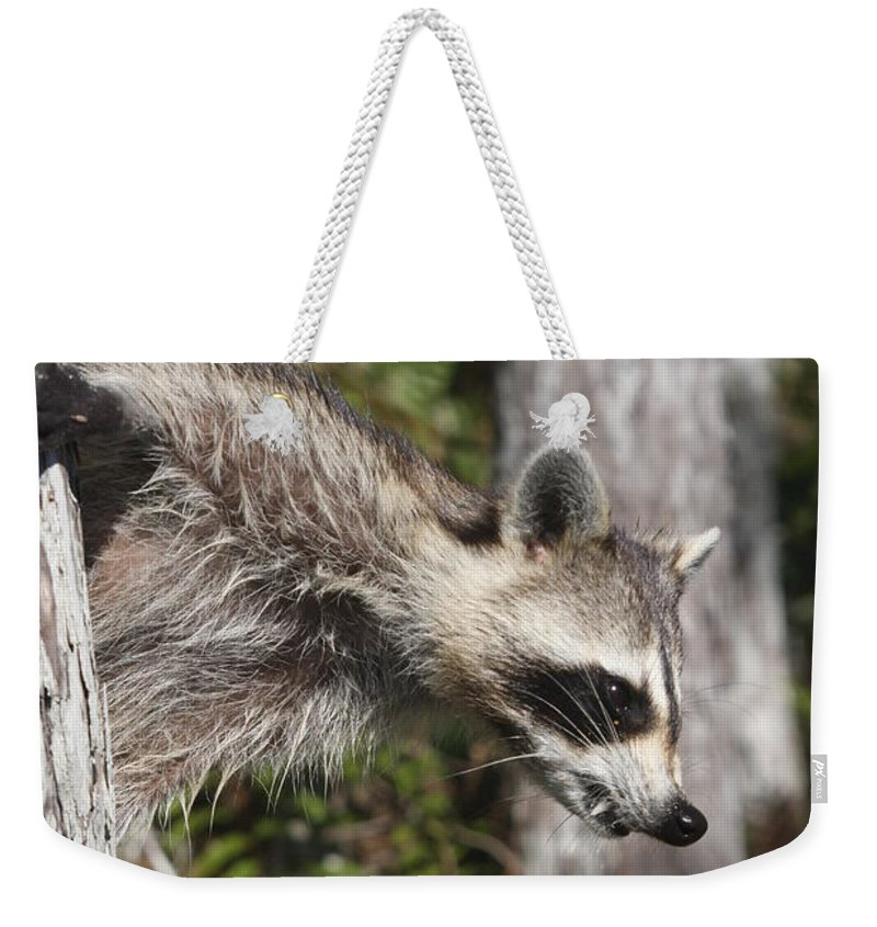 Raccoon Weekender Tote Bag featuring the photograph Raccoon by Christiane Schulze Art And Photography