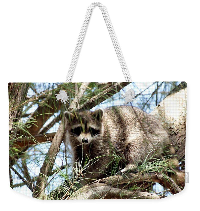 Raccoon Weekender Tote Bag featuring the photograph Raccoon In A Tree by Larry Allan