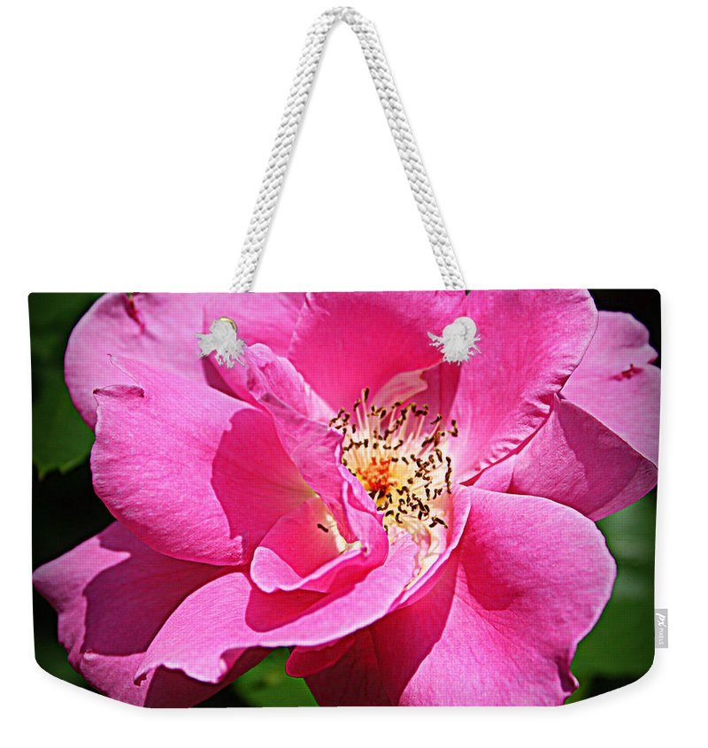 Rose Weekender Tote Bag featuring the photograph Radiant In Pink - Rose by Dora Sofia Caputo Photographic Design and Fine Art