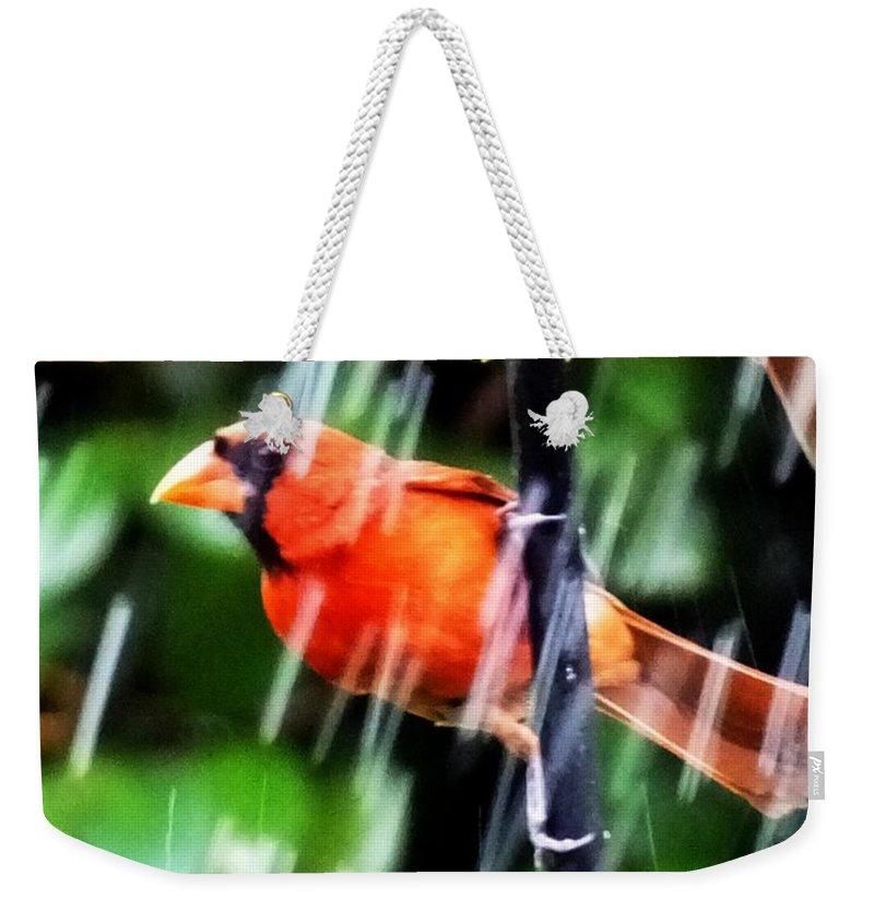 Bird Weekender Tote Bag featuring the photograph Rain Bird by Lizi Beard-Ward