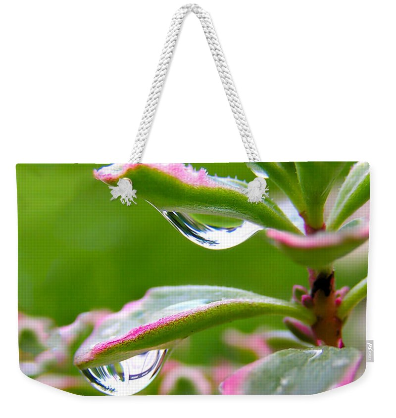 Raindrops On Sedum Weekender Tote Bag featuring the photograph Raindrops On Sedum by Cynthia Woods