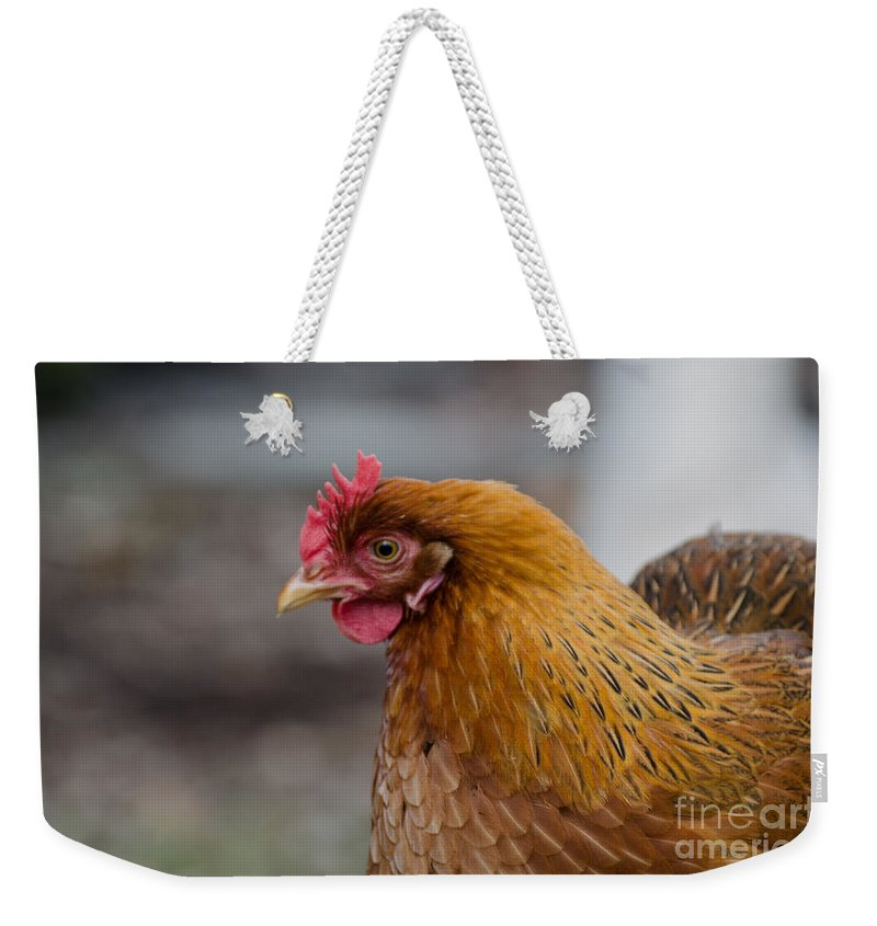 Chicken Weekender Tote Bag featuring the photograph Rainbow Hen by Donna Brown