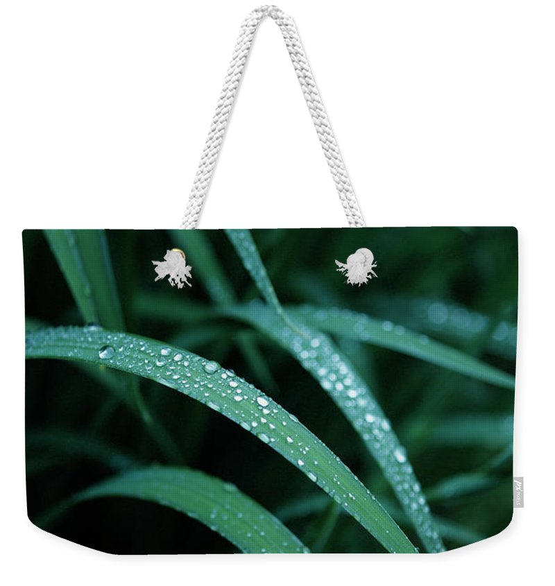 Tranquility Weekender Tote Bag featuring the photograph Raindrop by Seiji Nakai