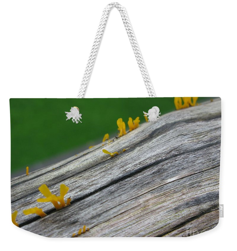 Rainforest Blooms Weekender Tote Bag featuring the photograph Rainforest Blooms by Mini Arora