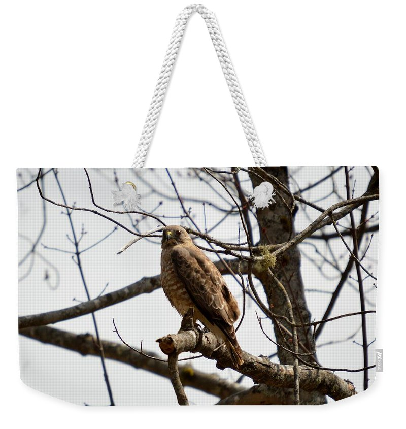 Redtailed Hawk Weekender Tote Bag featuring the photograph Raptor Gaze by Thomas Phillips