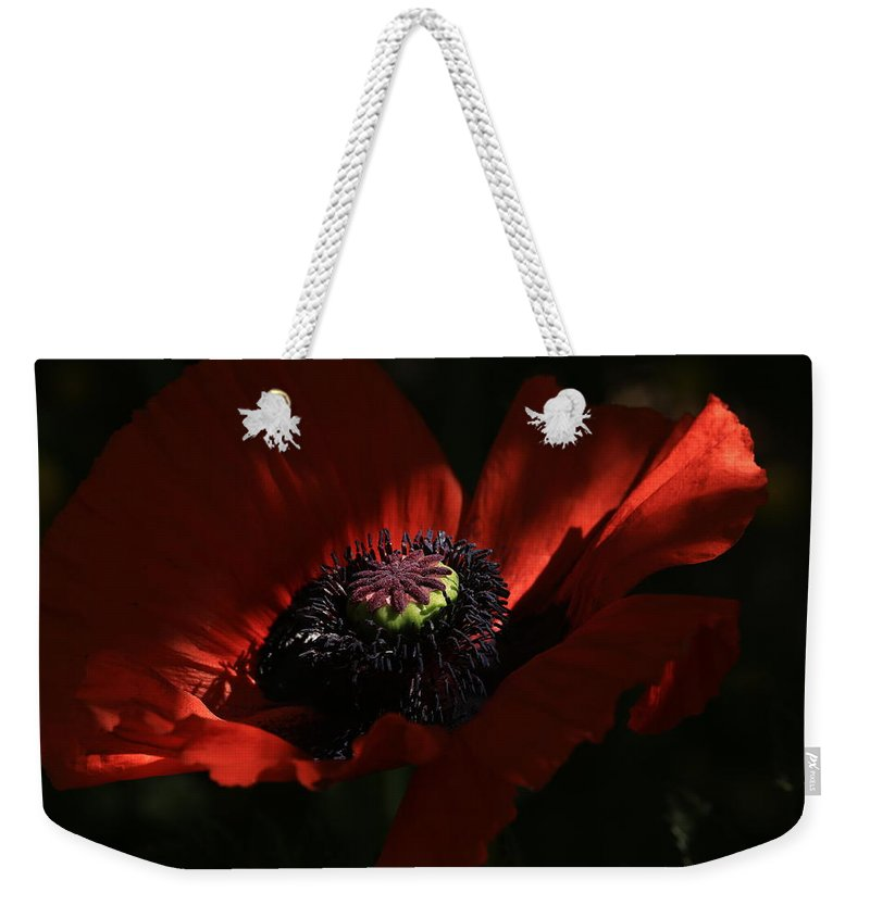 Poppy Weekender Tote Bag featuring the photograph Ray Of Light by Donna Kennedy