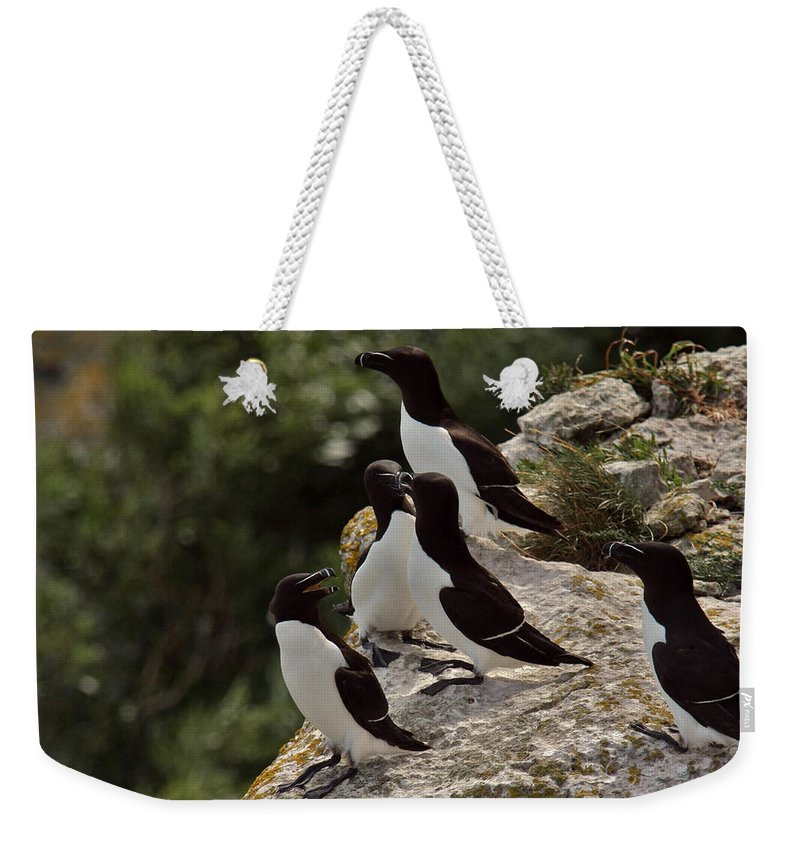 Alvinge Weekender Tote Bag featuring the photograph Razorbill Cliff by Dreamland Media