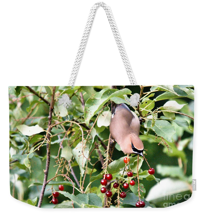 Cedar Waxwing Weekender Tote Bag featuring the photograph Reaching by Cheryl Baxter