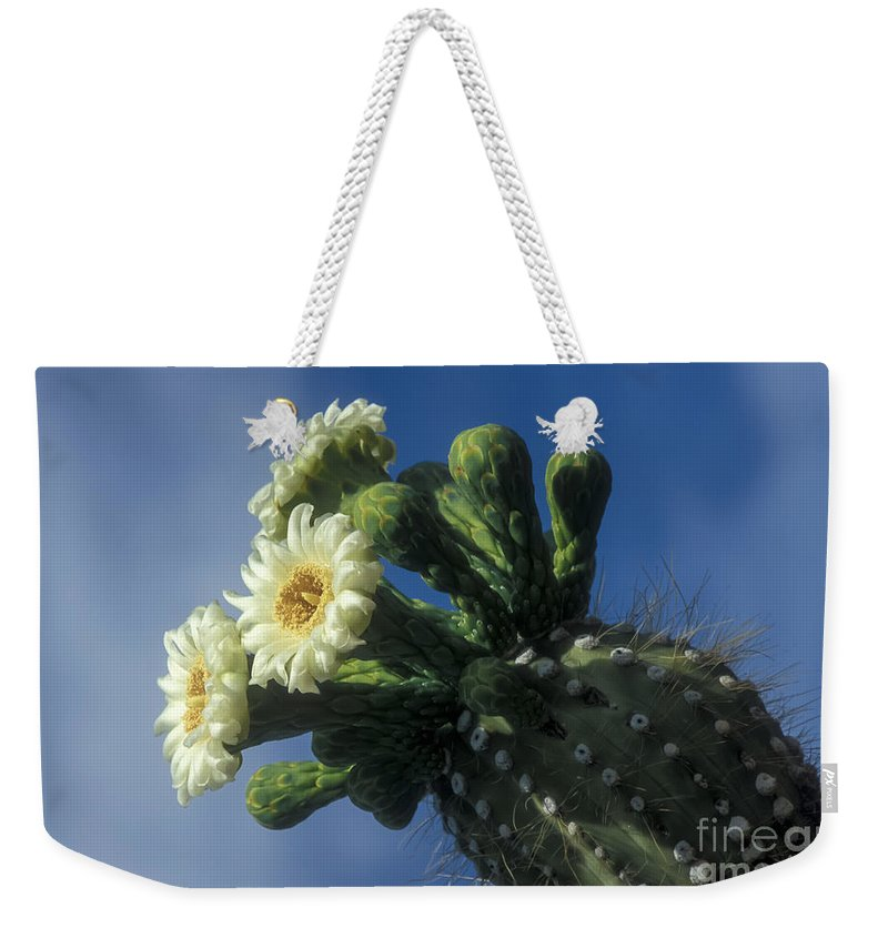 Cactus Weekender Tote Bag featuring the photograph Reaching For The Sky by Sandra Bronstein
