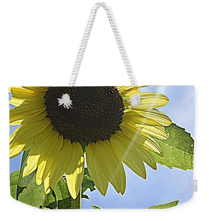 Sunflower Weekender Tote Bag featuring the photograph Reaching For The Sun by Dora Sofia Caputo Photographic Design and Fine Art
