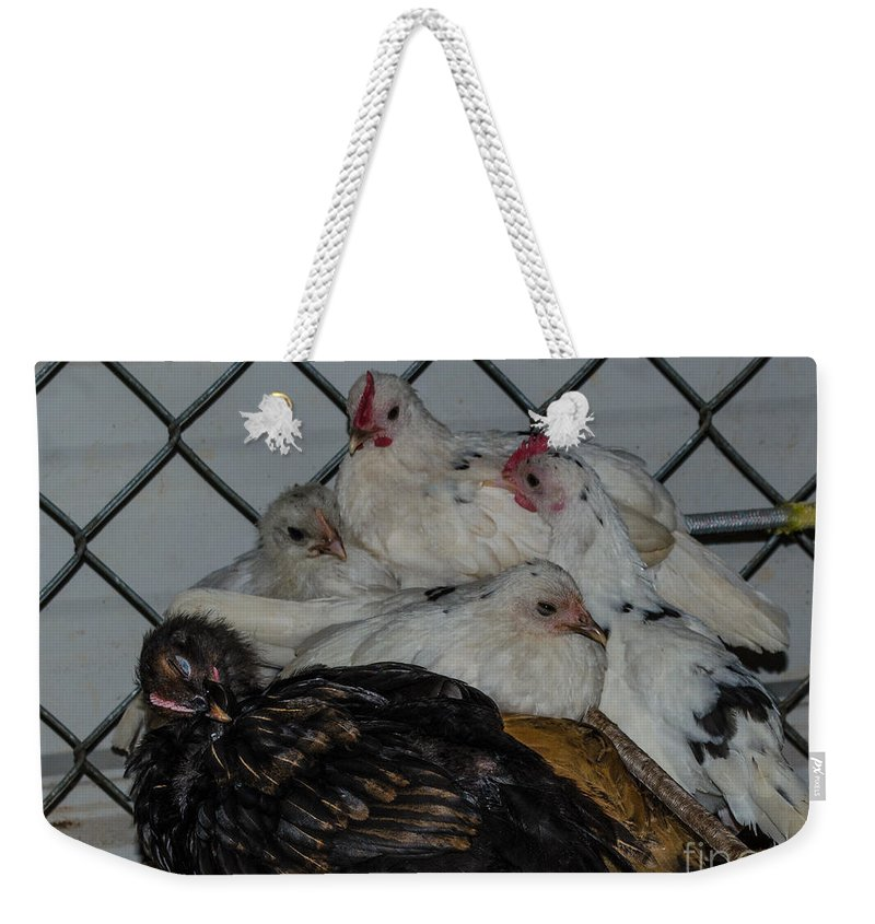 Birds Weekender Tote Bag featuring the photograph Ready To Go To Sleep by Donna Brown