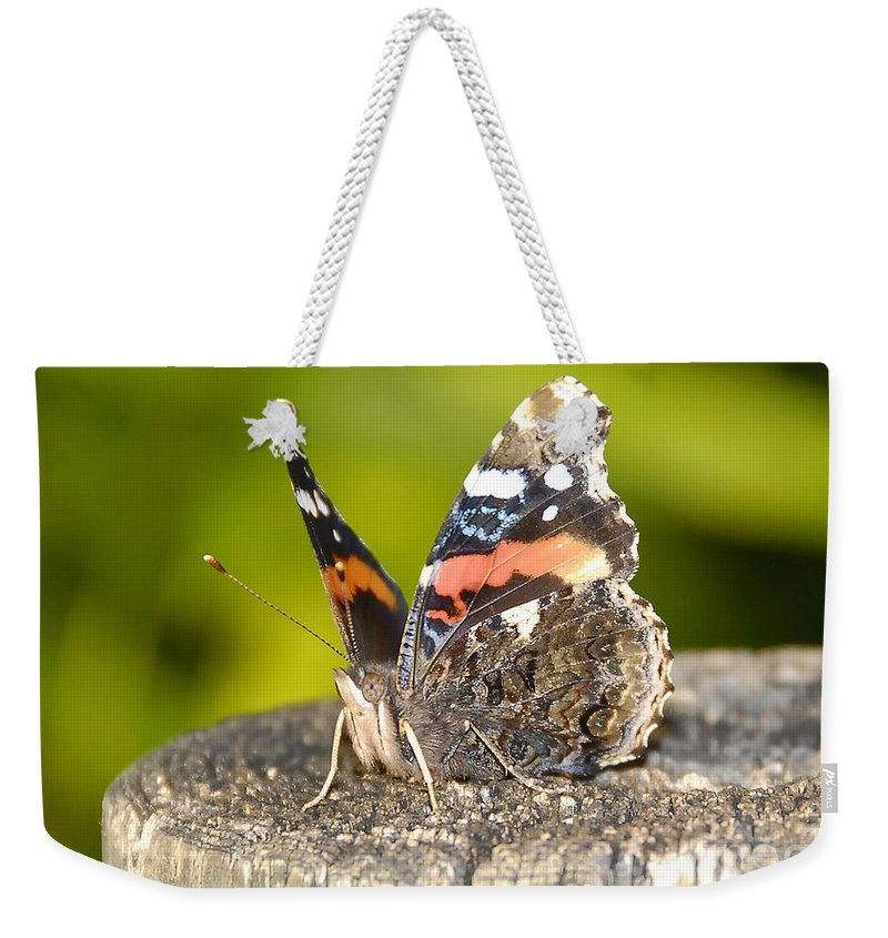 Red Admiral Butterfly Weekender Tote Bag featuring the photograph Red Admiral Butterfly by David Lee Thompson
