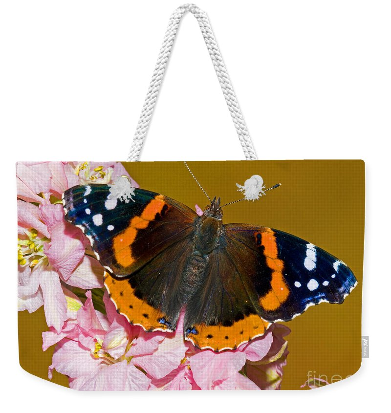 Animal Weekender Tote Bag featuring the photograph Red Admiral Butterfly by Millard H. Sharp