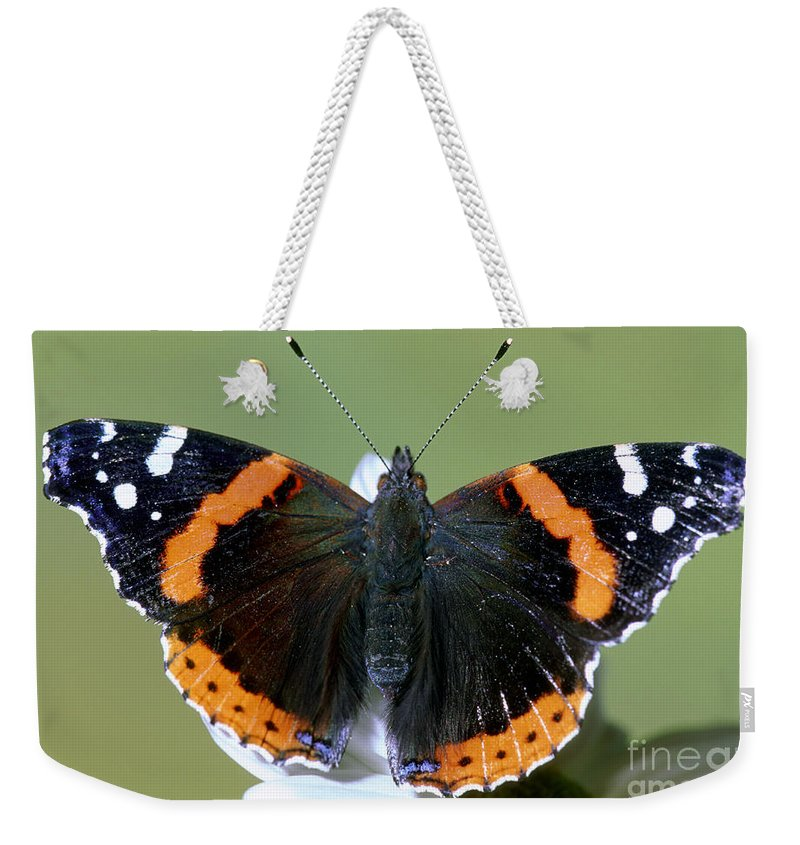 On Flower Weekender Tote Bag featuring the photograph Red Admiral Butterfly by Millard Sharp