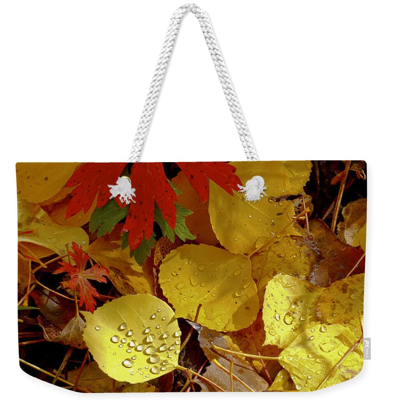San Juan Mountains Colorado Autumn Leaves Fall Foliage Red Aspen Leaf Yellow Rain Drops Drop Still Life Weekender Tote Bag featuring the photograph Red And Yellow by Bob Phillips